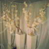 orchid-blossom-tree-decoration – Copy