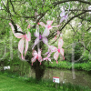 butterfly-event-decorations